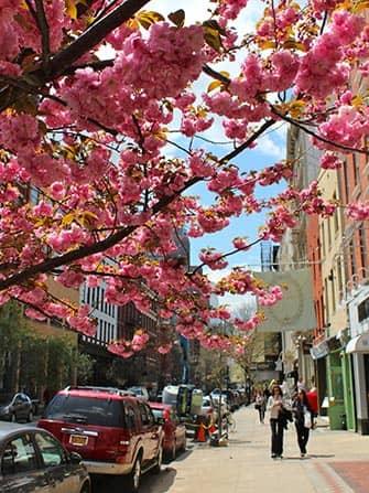 Сохо в Нью-Йорке цветы