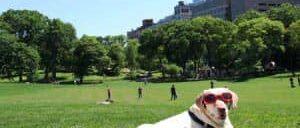 Парки в Нью Йорке
